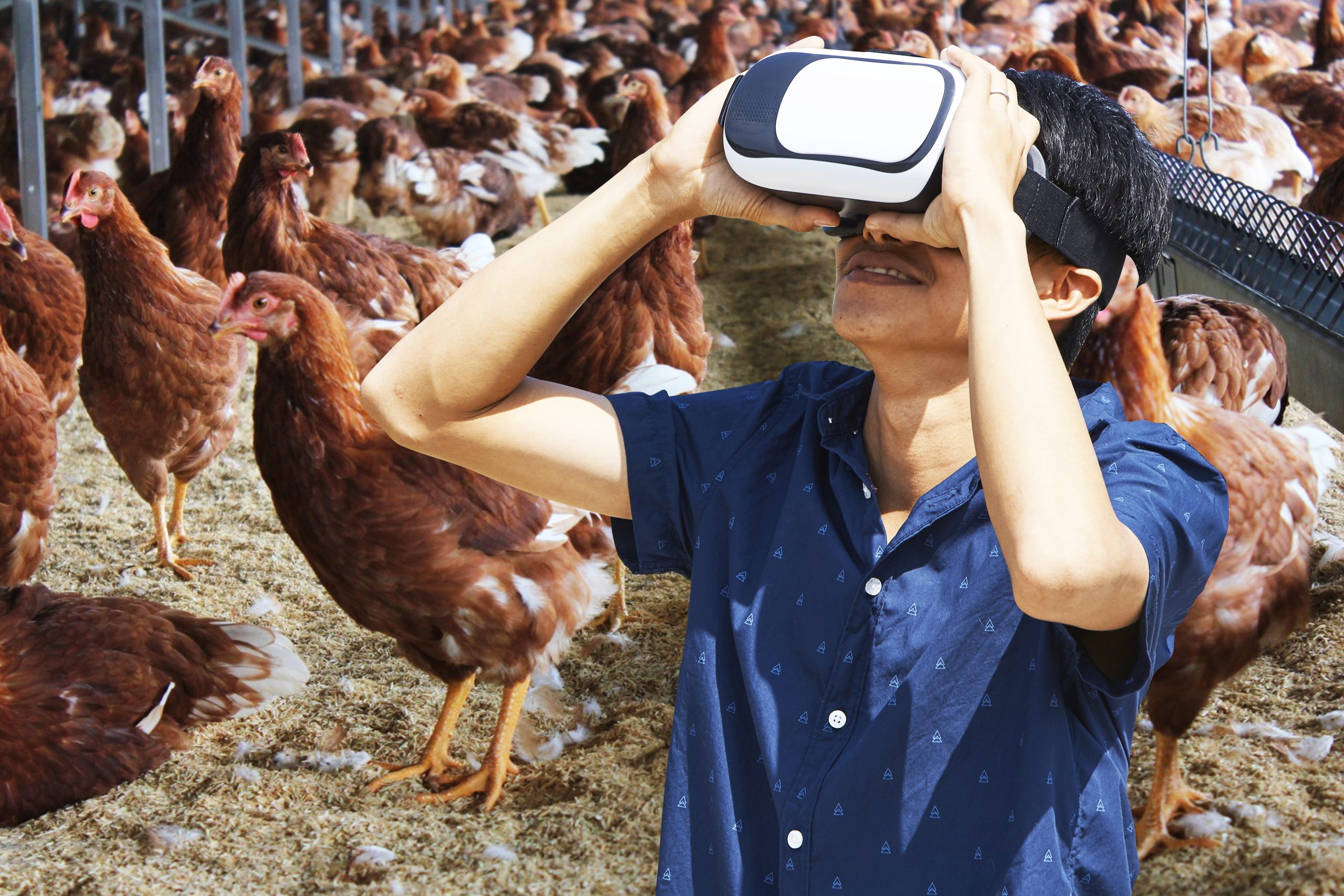 Supporting Farmers in Asia: Cage-Free Training Centres in China and Indonesia